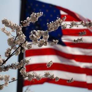 american-flag-flower-july-4th-1093645